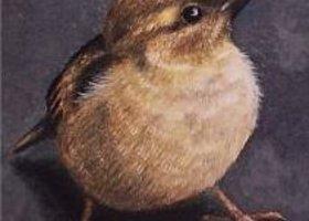 Sparrowavatar_show