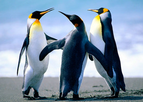 Penguins_show