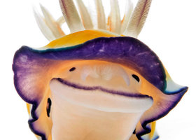 Happy_nudibranch_show