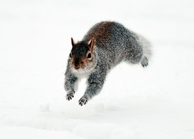 A-squirrel-runs-through-t-007_show