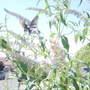 D2e333713a1b184ed2ce1b35b4c6fc5291206c58_large