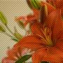 397095167_072723fafd_o_large