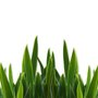 Grass_close-up_large