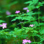 Forest_flowers_large