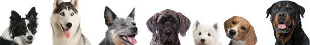Dog_banner_show