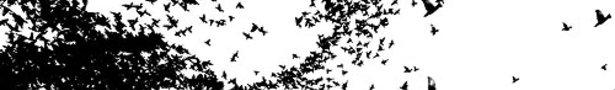Birds_show