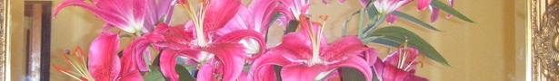 Dscf2084_show