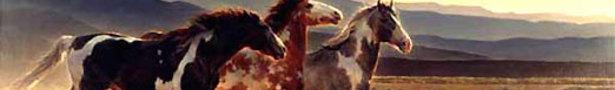 Wild_desert_horses_show