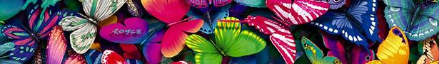 Butterflies_collection_1a_show