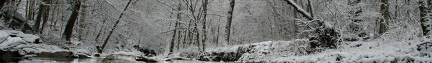 Winter2_show
