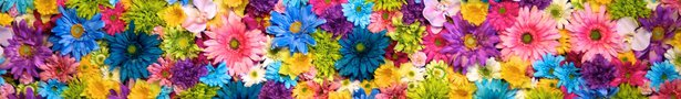Nick_harris_colorful_flower_wall_ykvlqq_show
