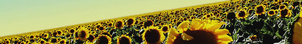 Sunflower_banner_show