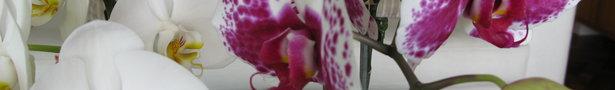 005_show
