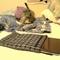 Laptop-lisko_grid