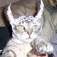 Catintinfoil_listing