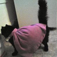 Cat_cape_listing
