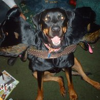 Roxy_three_headed_dog_2_listing