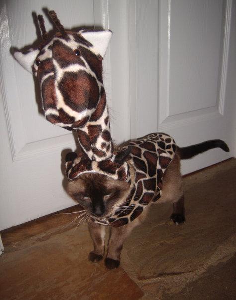Giraffecat1_large