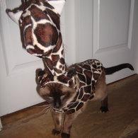 Giraffecat1_listing