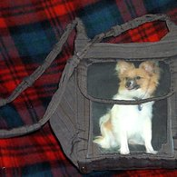 Oscar_purse_christmas05_listing