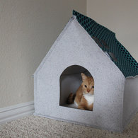 Cathouse1_listing