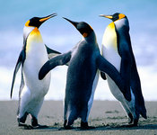 Penguins_listing